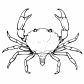 Crab, sea animals