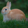 Pictures of bunny