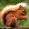 Pictures of squirrel