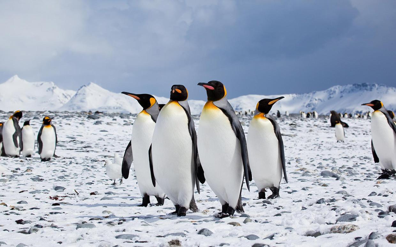 Fotos concentracion pinguinos 2012 49