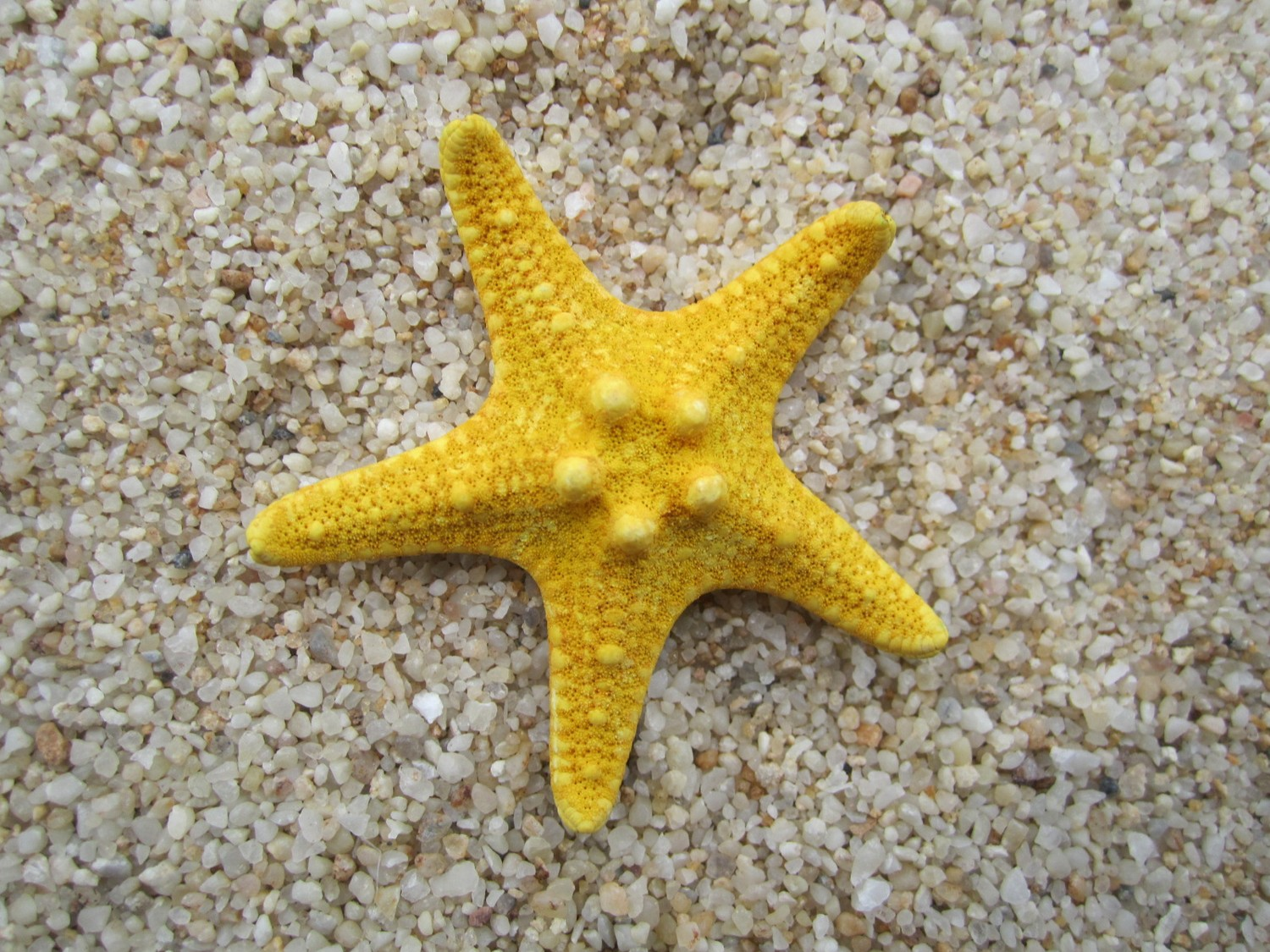 Starfish blog