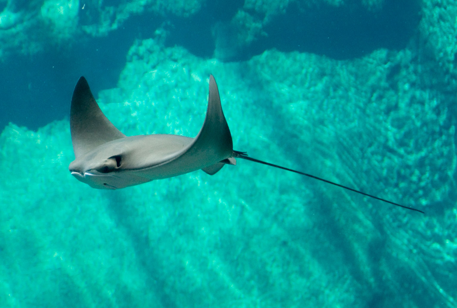 the survival of the stingray in scientific research