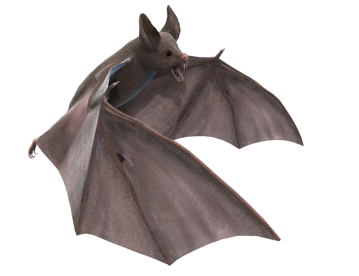 bat pictures kids search