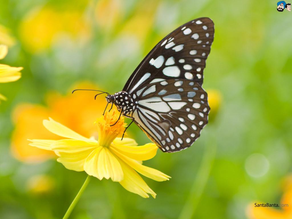 Butterfly Gallery: Butterfly Pictures