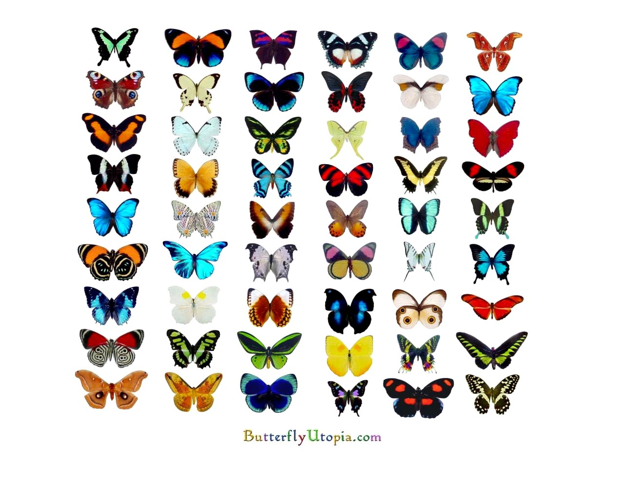 Butterfly Pictures - Kids Search
