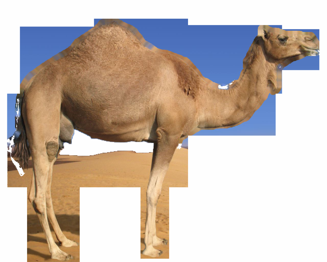 Www camelclips