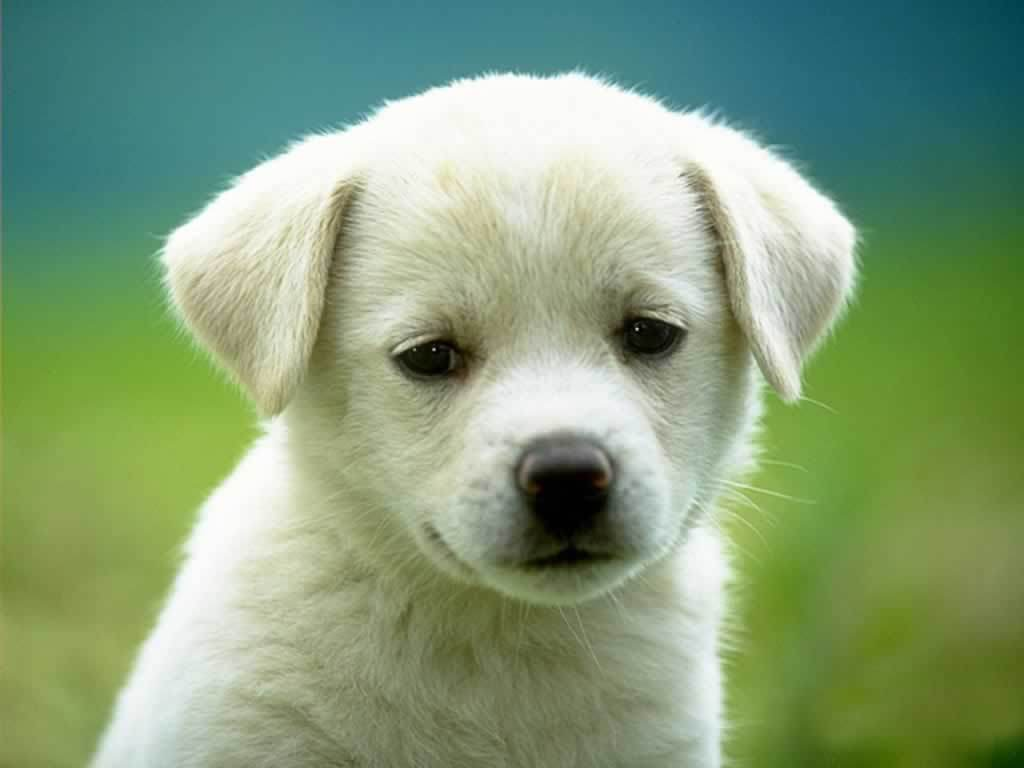 Dog Pictures - Kids Search