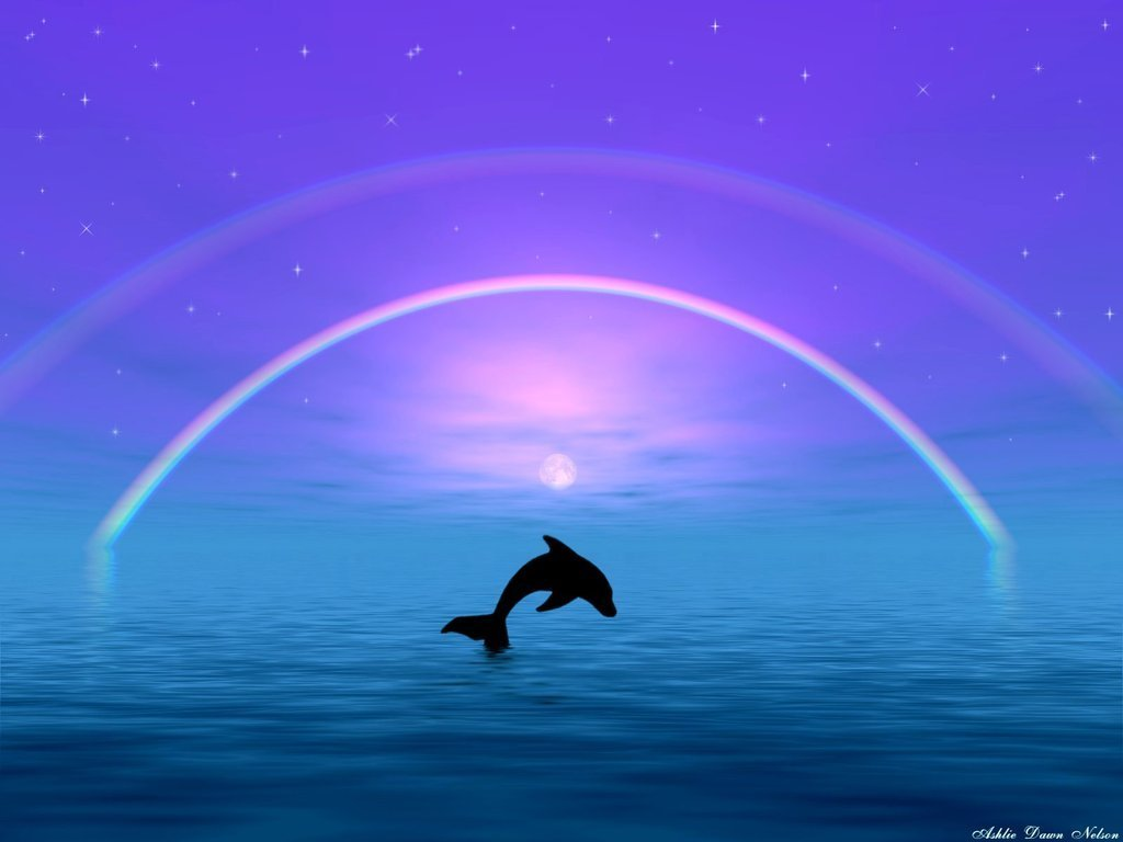 Dolphin Pictures Kids Search