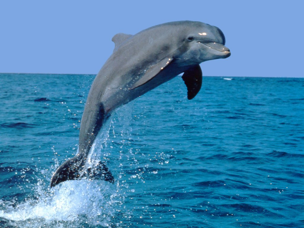 Dolphin pictures kids search cce7f96g voltagebd Images