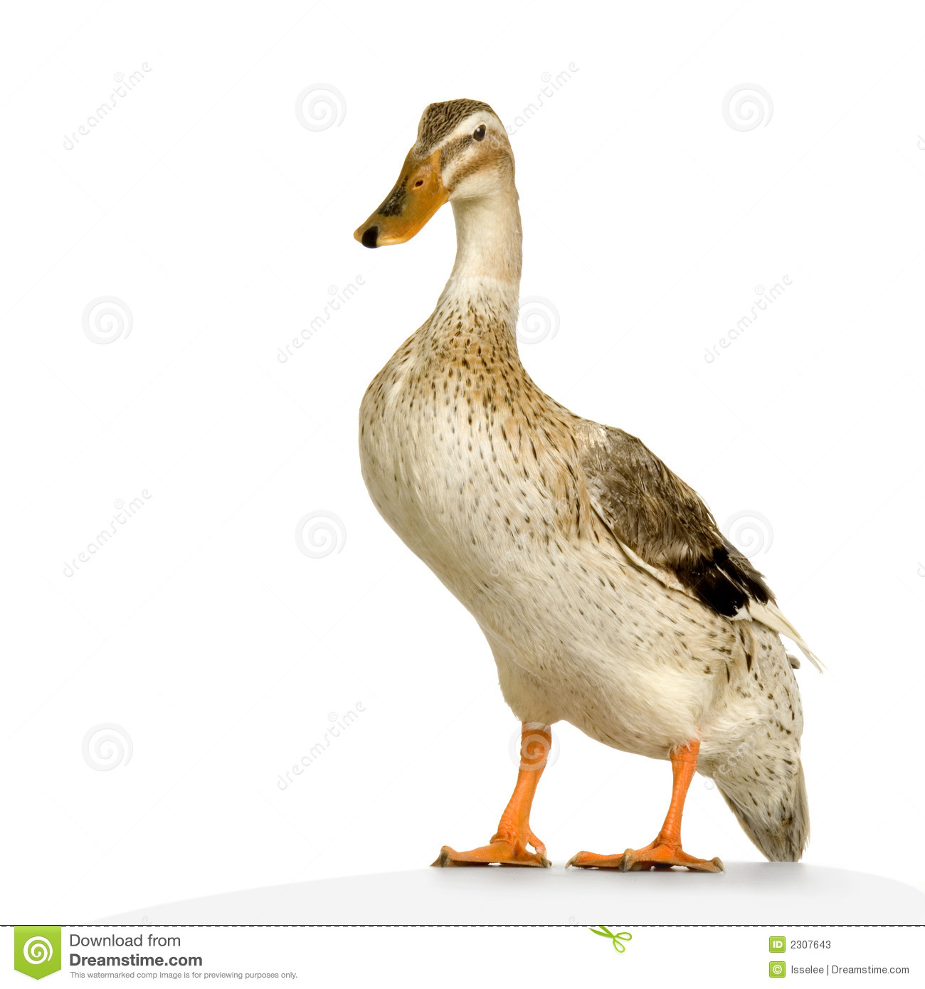 Duck Pictures Kids Search