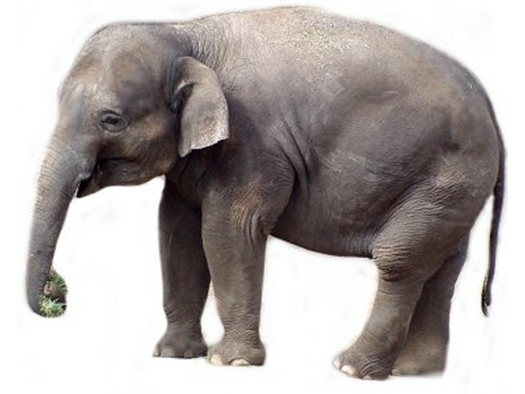 Elephant pictures kids search - Image elephant ...