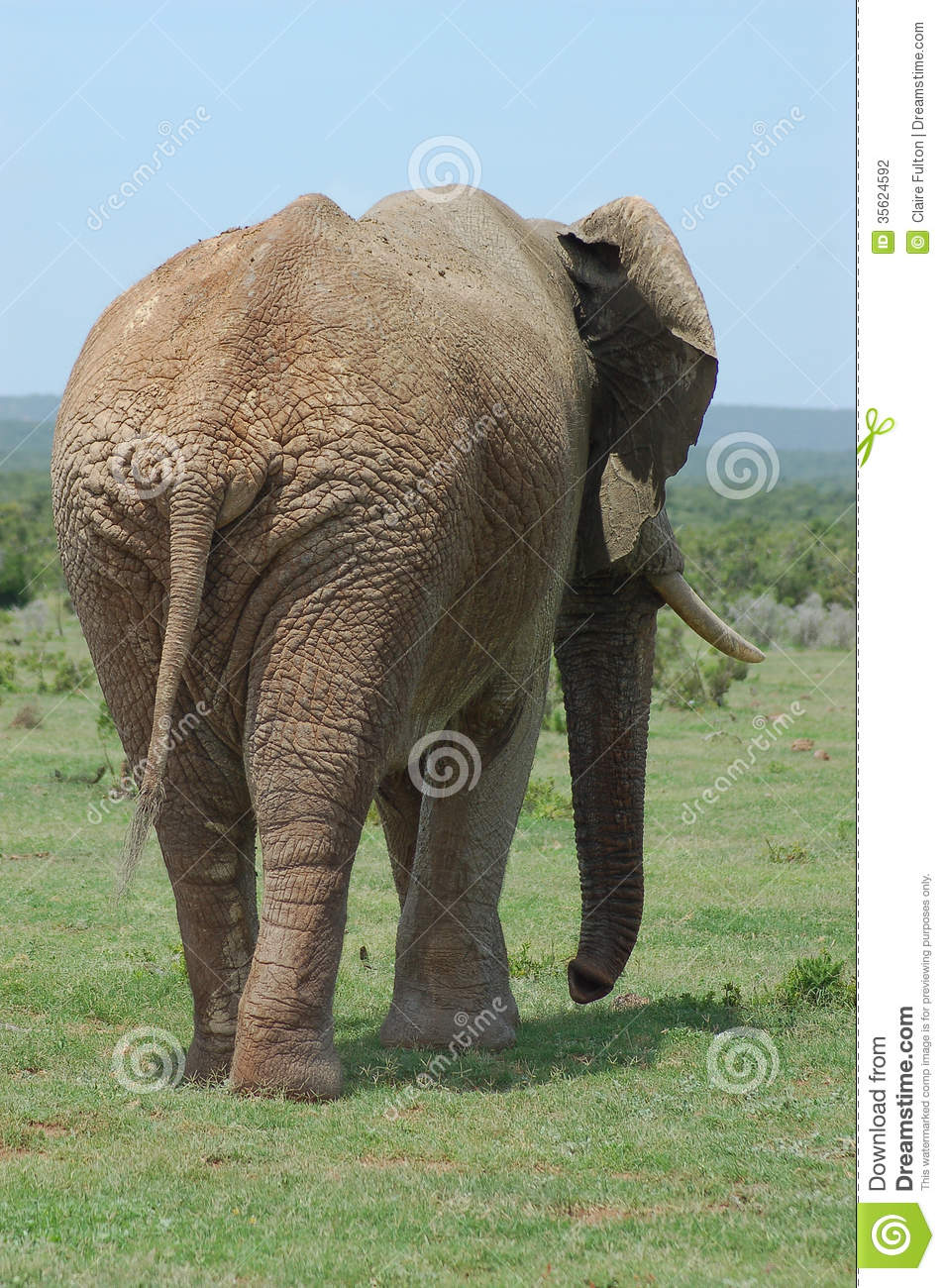 Elephant Pictures - Kids Search