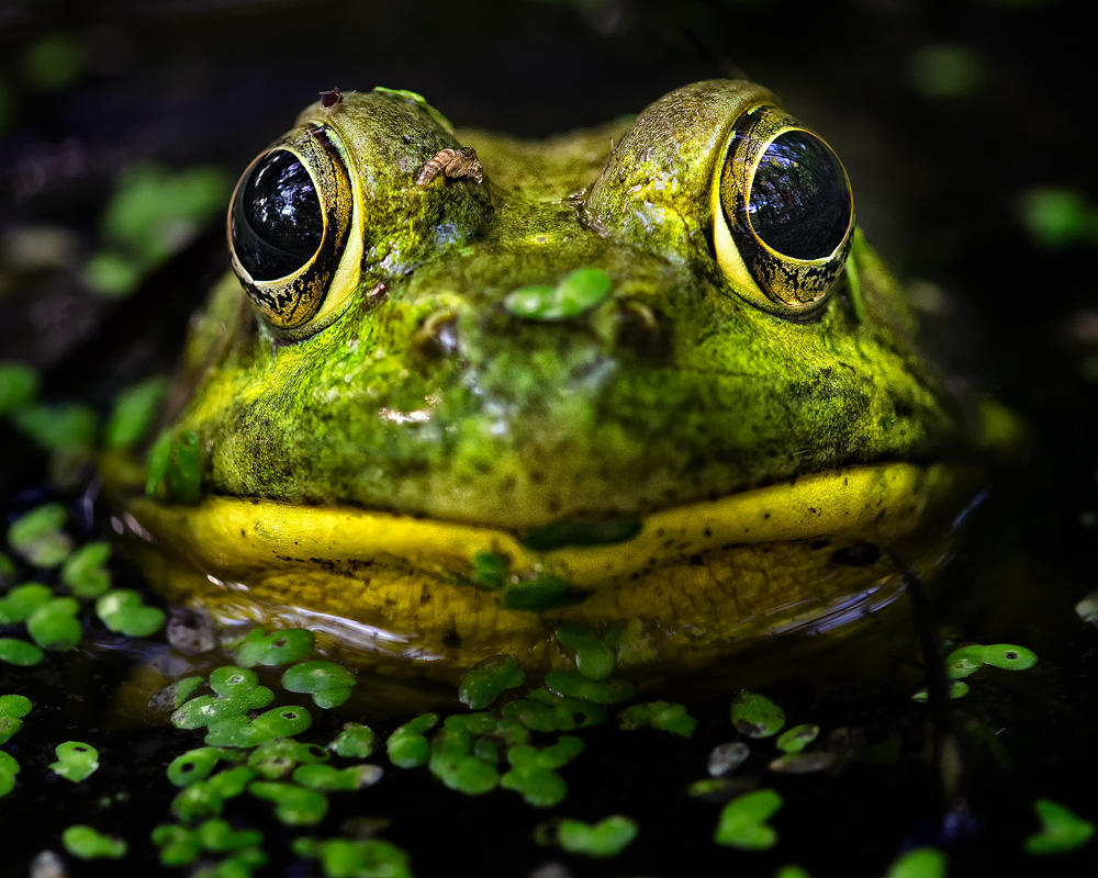 Frog Pictures - Kids Search