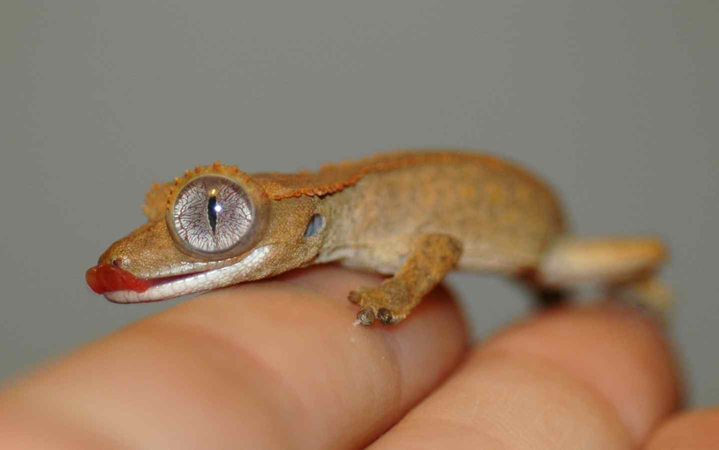 Gecko Pictures Kids Search
