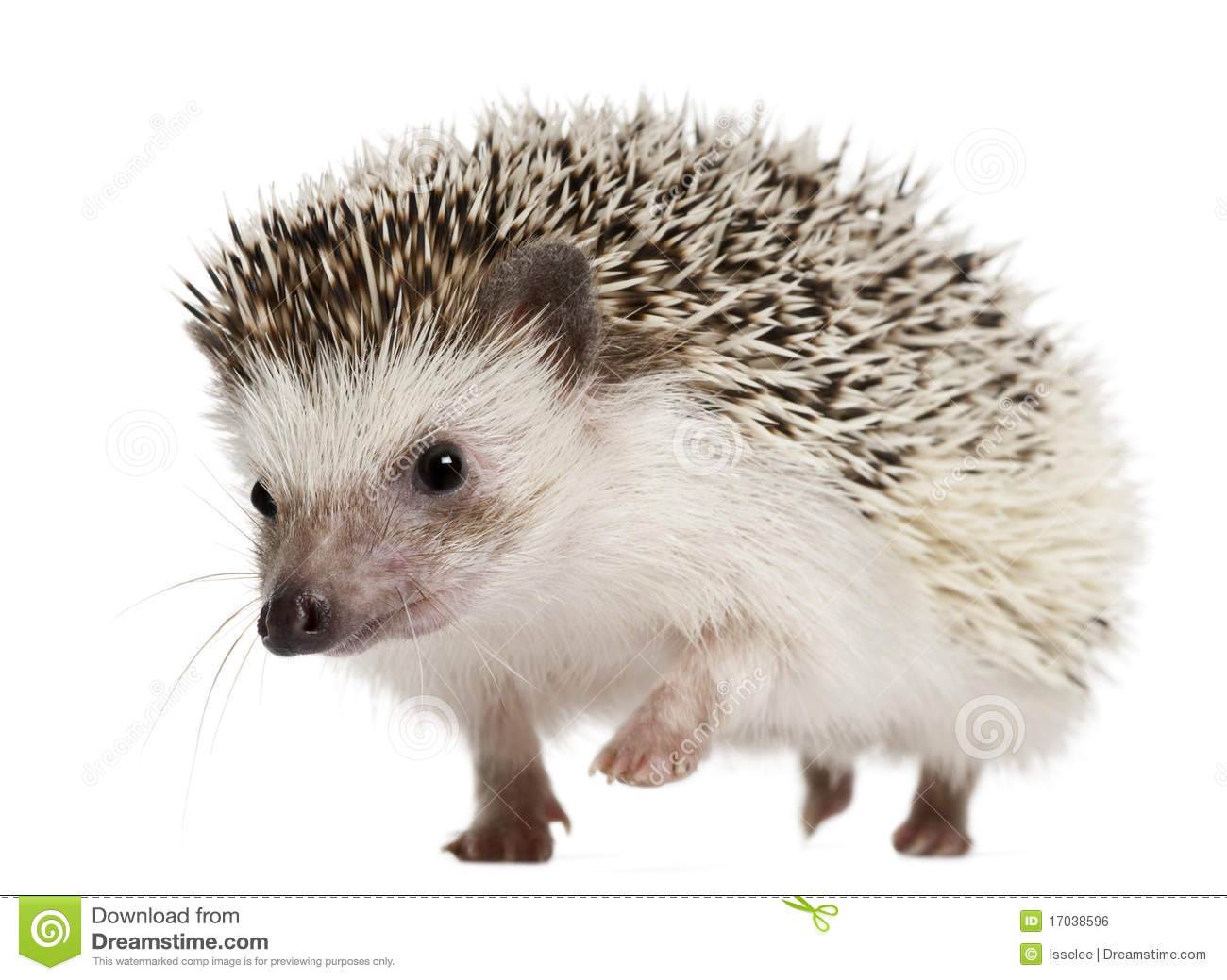 Hedgehog Pictures Kids Search