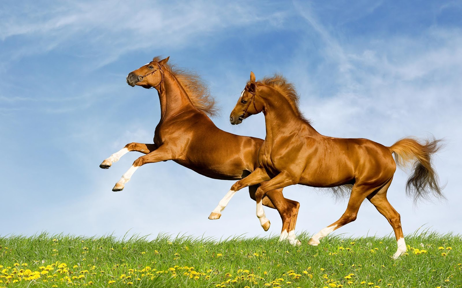 Horse Pictures Kids Search