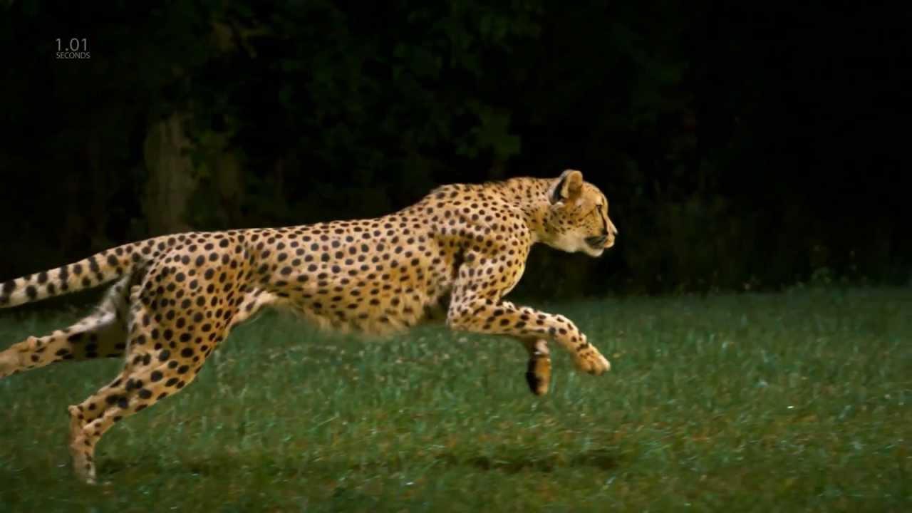 Jaguar Pictures Kids Search