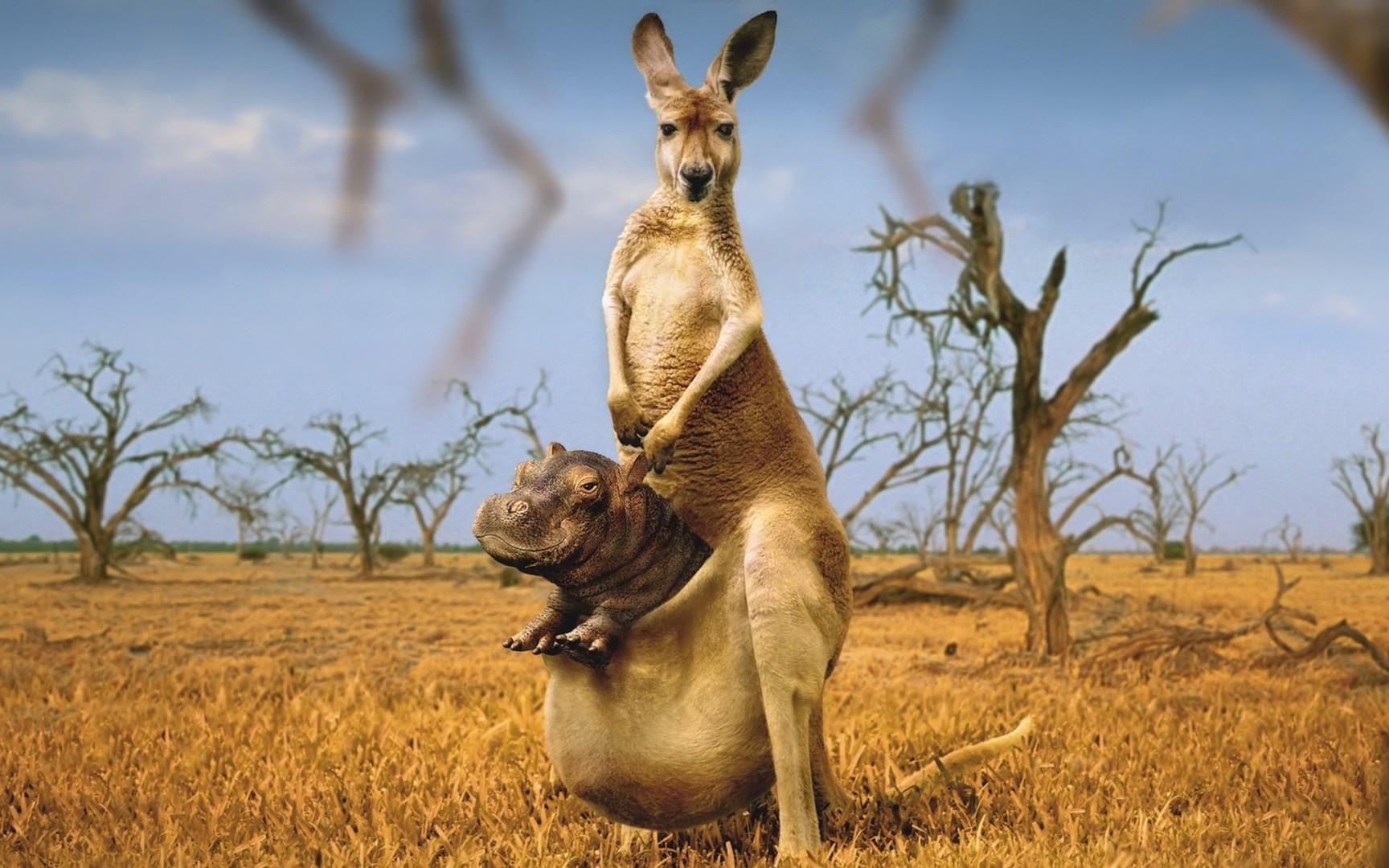 Kangaroo Kids Search
