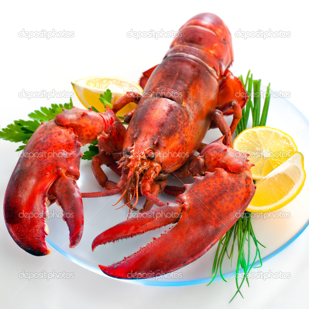 lobster pic 1024x1024 1841fde