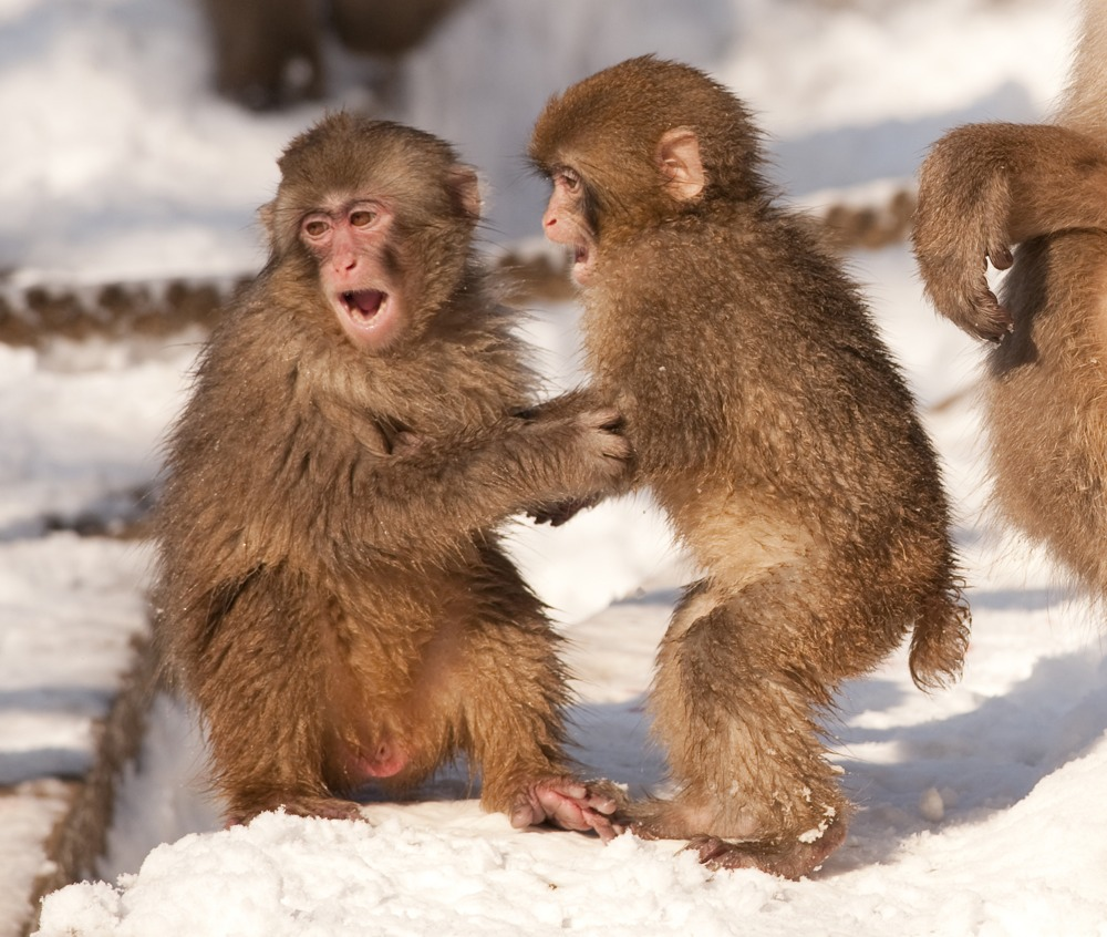 monkey pictures - kids search