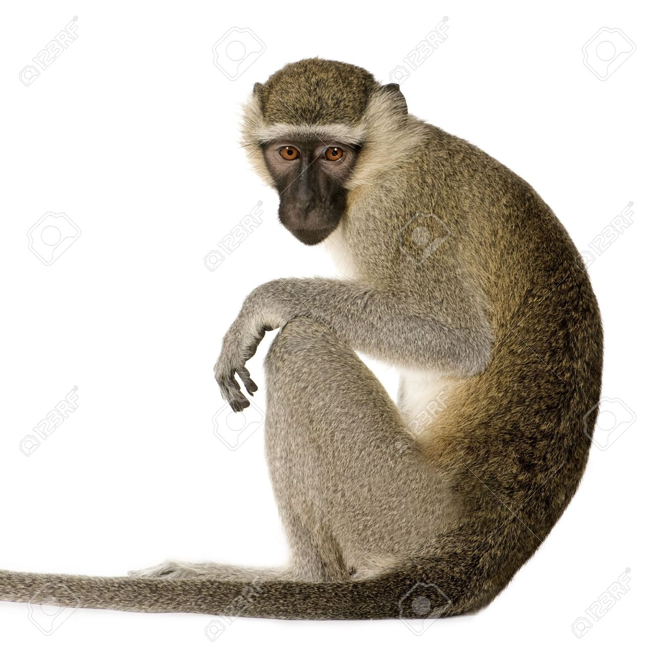 Monkey Pictures - Kids Search Pictures Search