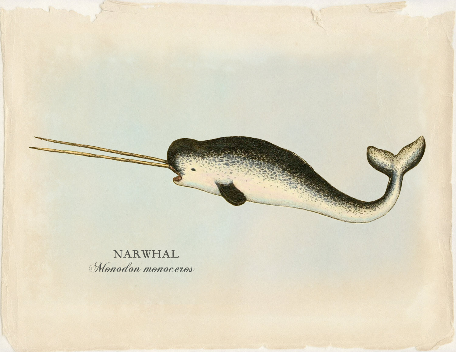narwhal pictures kids search