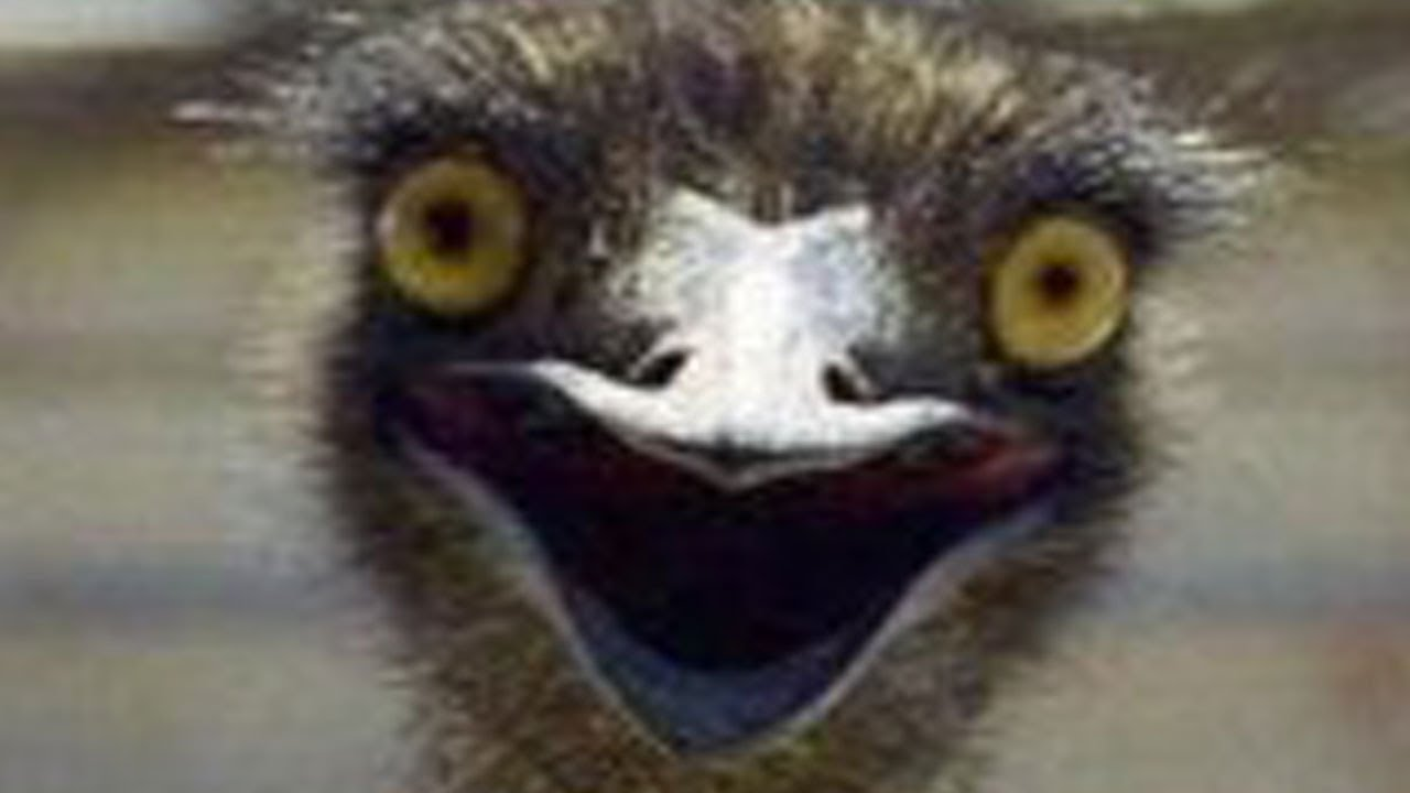 Funny Ostrich Videos For Kids