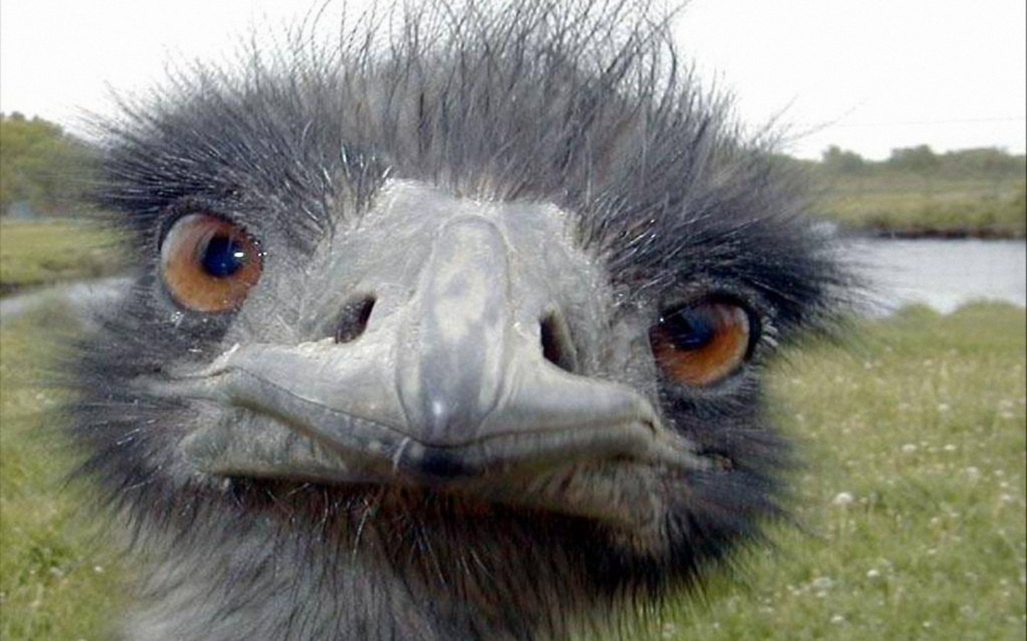 0cf2f71.png - Ostrich Pictures - Kids Search