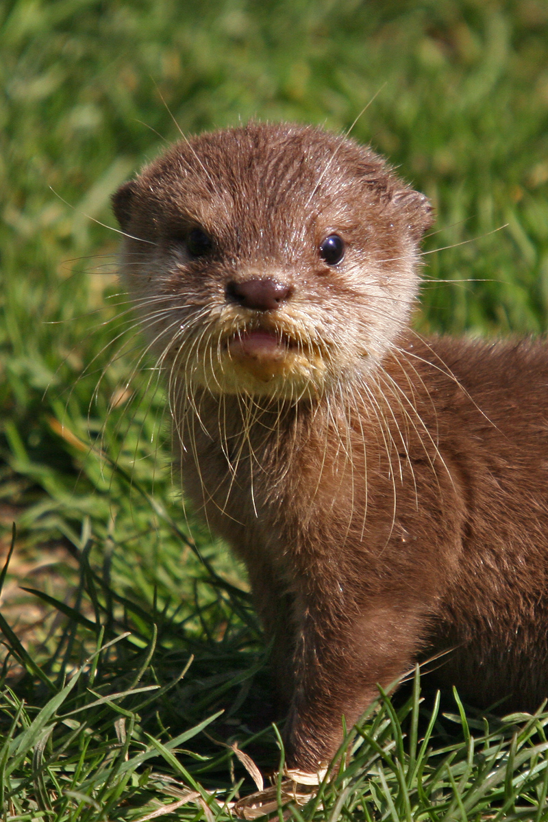 Otter Pictures Kids Search