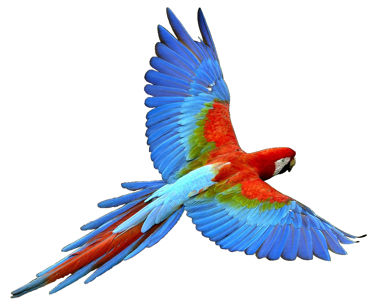 Parrot Pictures Kids Search