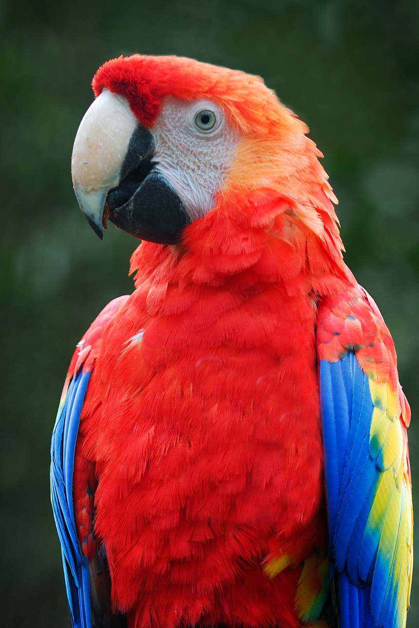 Parrot Pictures - Kids Search