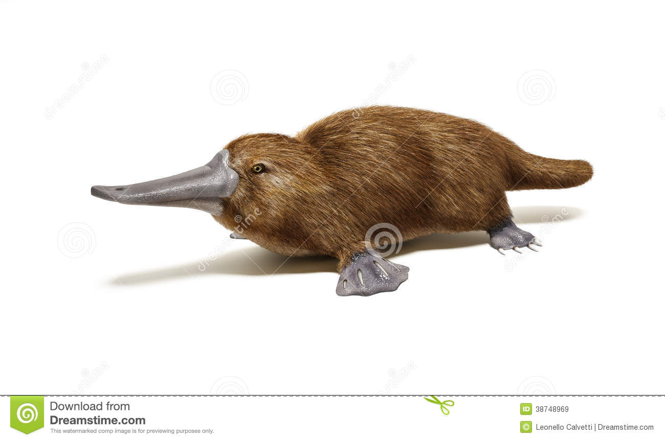 a study of the platypus Guided lessons are digital games and exercises that keep track of your progress and help you study smarter the platypus game: guess who ice cream.