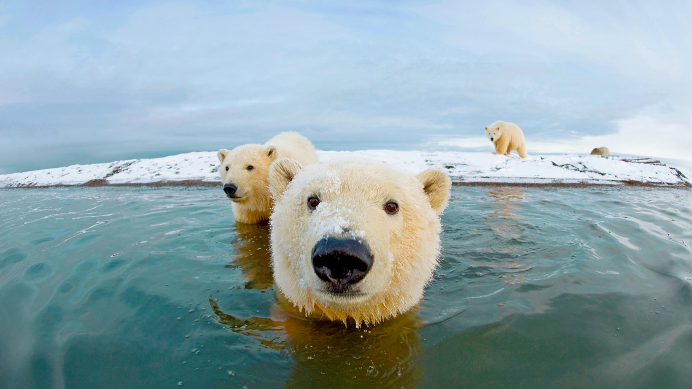polar bear pictures kids search