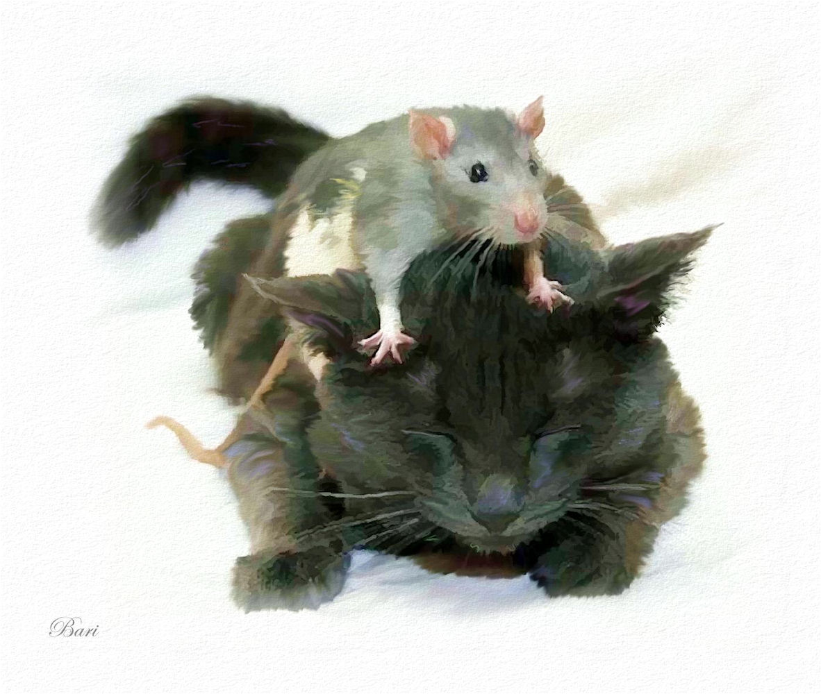 Rat Pictures Kids Search