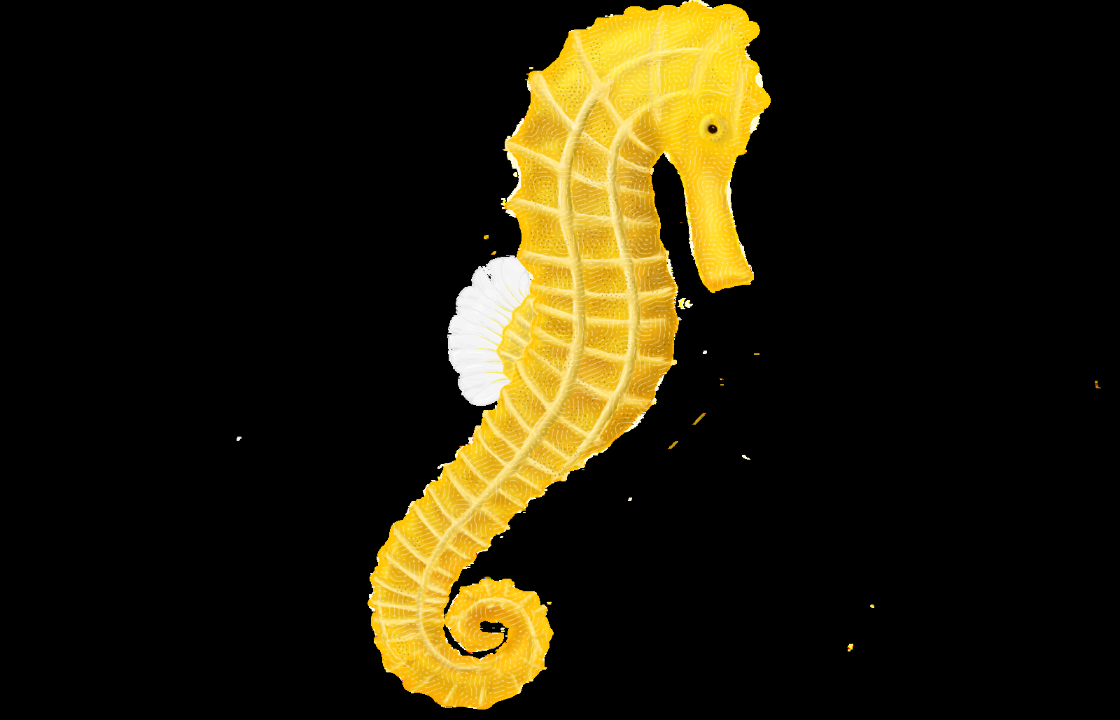 Seahorse Pictures Kids Search