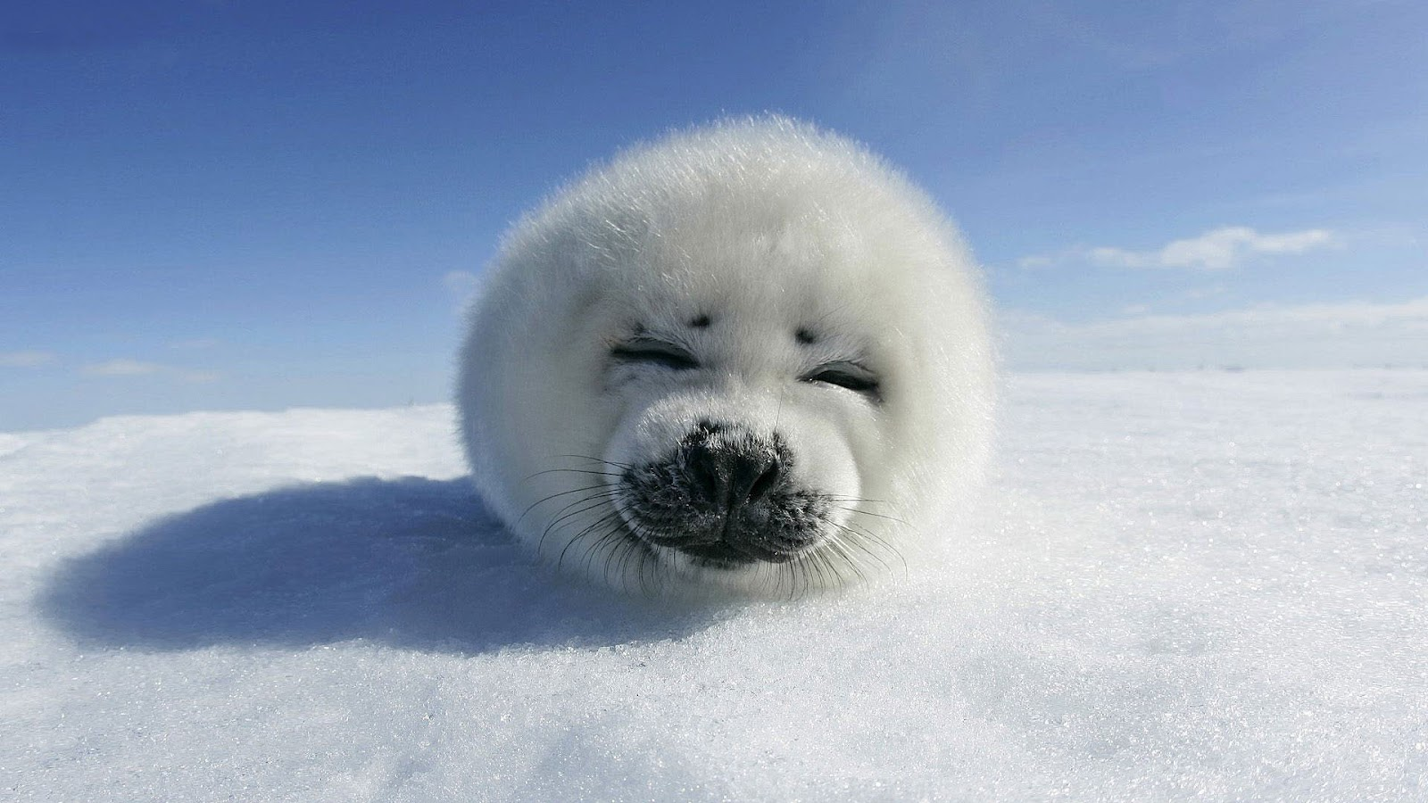 seal pictures kids search