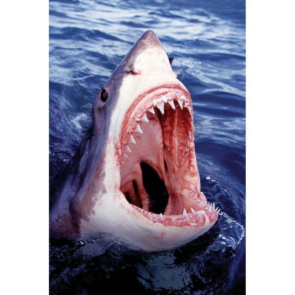 shark pictures kids search
