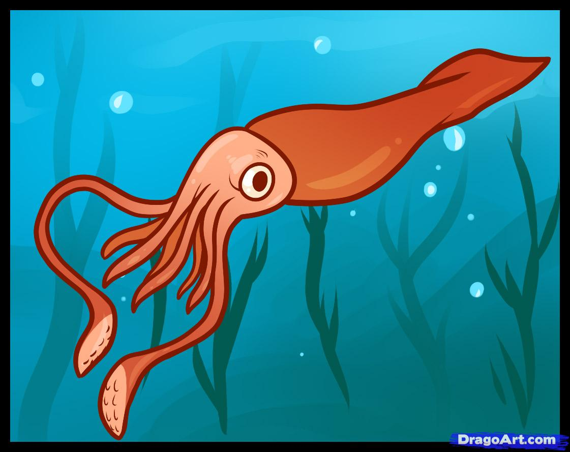 squid pictures kids search