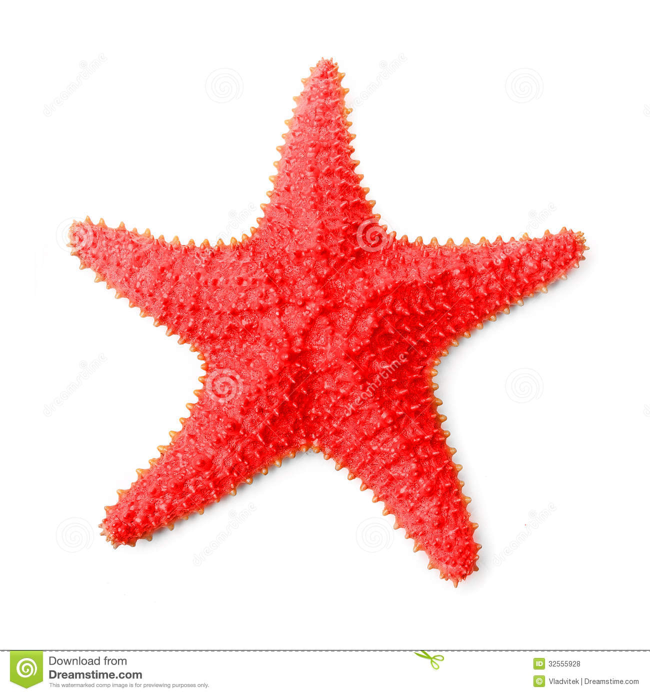 Starfish Pictures - Kids Search