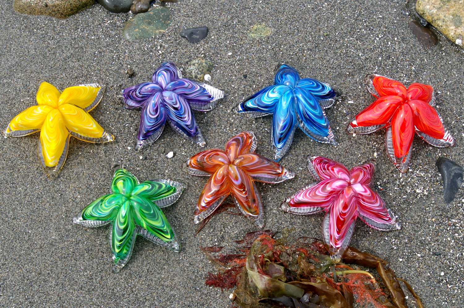 Starfish Pictures Kids Search