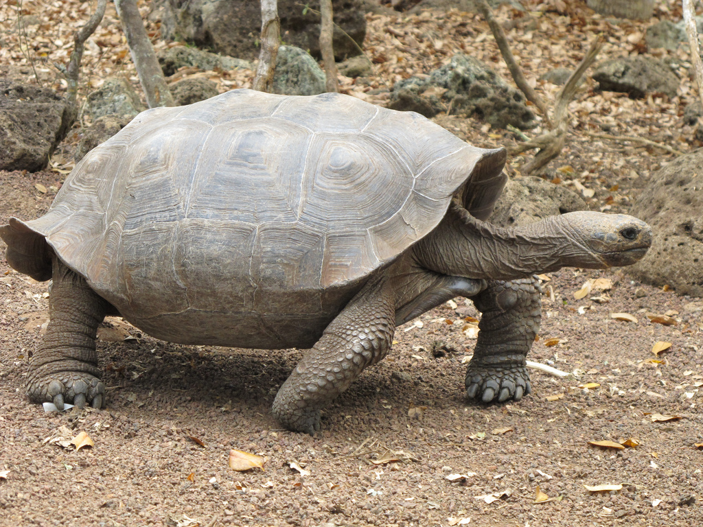 Uncategorized Tortoise Pictures For Kids tortoise pictures kids search