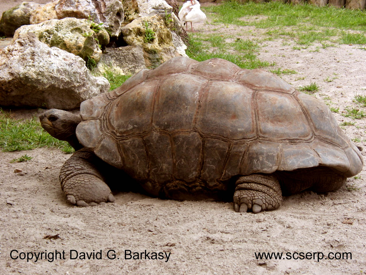 Uncategorized Tortoise Pictures For Kids tortoise pictures kids search 5c0c8f3 png