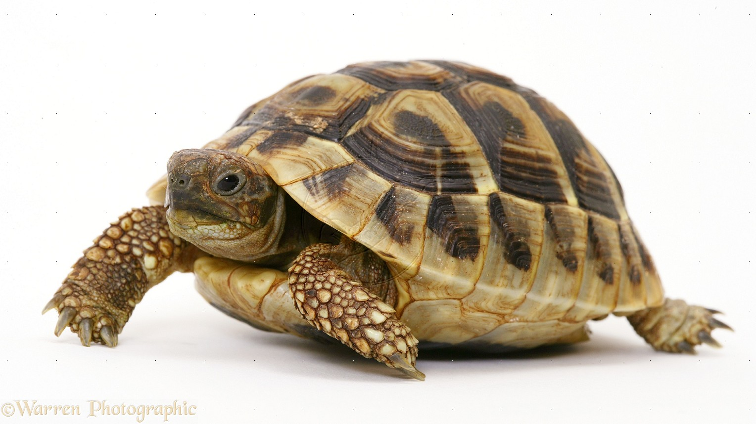 Tortoise Pictures Kids Search