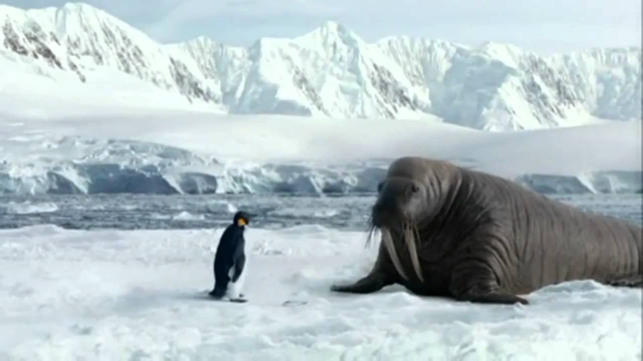 Walrus Pictures - Kids Search